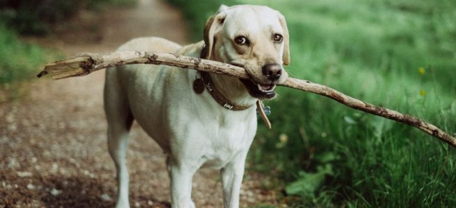 Hundpromenadens enkla lycka